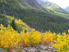 Cottonwood Trail in September